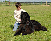 Newfoundland Dog w Companion